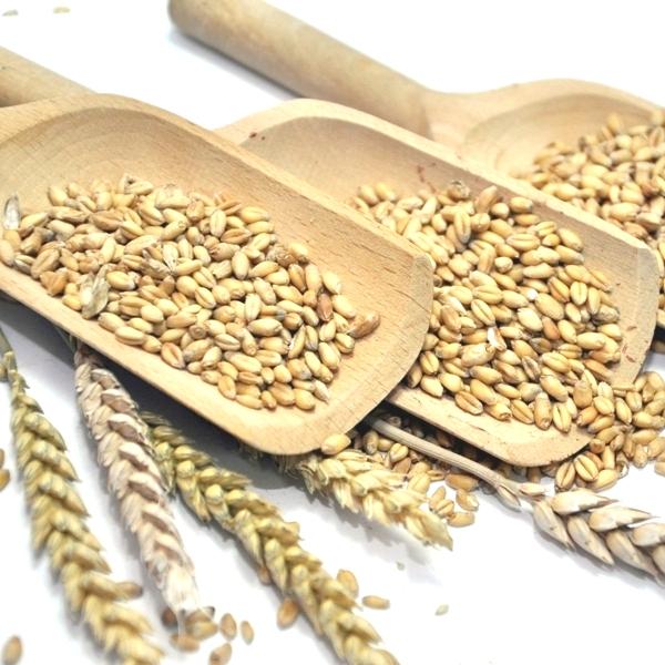 Organska pšenica belija 1kg