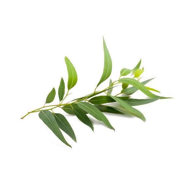 Etarsko ulje Eukaliptusa 10ml