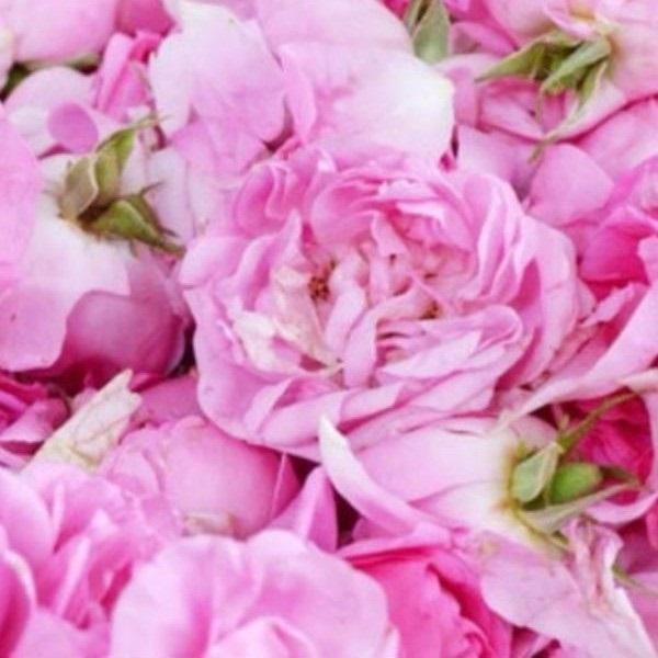 Hidrolat Ruže 50ml